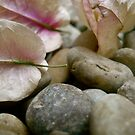 petals in the pebbles by Tara Filliater