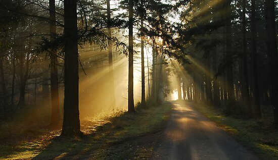 Going on a lightful forest road by jchanders