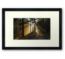 Going on a lightful forest road Framed Print