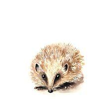 Hedgehog by ellaquaint