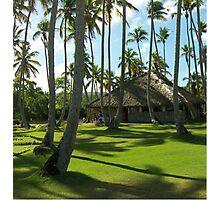 Coconut Plantation Photographic Print