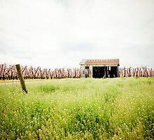 Country Barn by Nick Rubalcaba