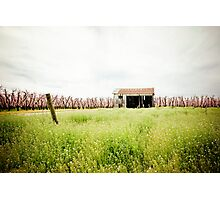 Country Barn Photographic Print