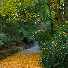 Autumn Path by James Torrington
