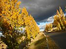 Autumn Storm by yolanda