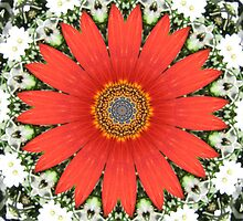 Red Flower Kaleidoscope by grwatt
