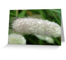 Grass and rain drops Greeting Card