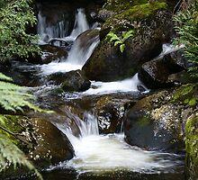 creek near 'The Beeches' walk by Rosie Appleton