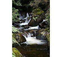 creek near 'The Beeches' walk Photographic Print