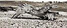 Log - Mulka Ruins by Jeff Catford