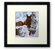 Stop Taking Pictures and Get My Breakfast!!! Framed Print