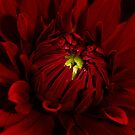 Today is red by Angelique Brunas