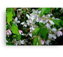 The Blooms ! Canvas Print