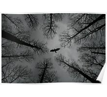 Buzzard in the woods Poster