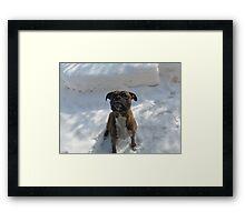 Snow Sitting Framed Print