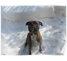 Snow Sitting Poster
