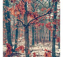 Trees losing their leaves Photographic Print