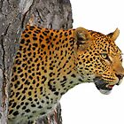 Mashaba inside a tree! by jozi1