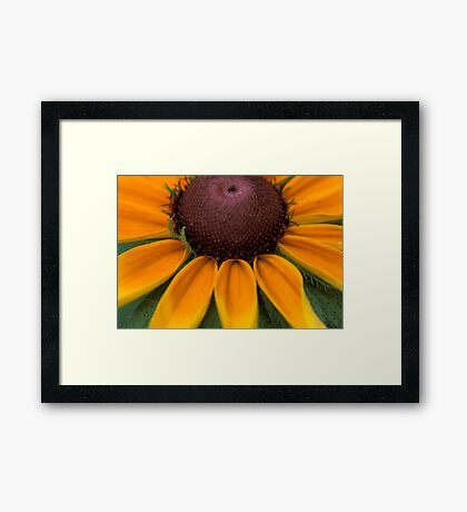 Rays of  Black Eyed Susan Framed Print