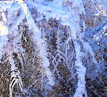 Frozen Briar Patch by Lisa Taylor