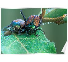 A Pair of Japanese Beetles Poster