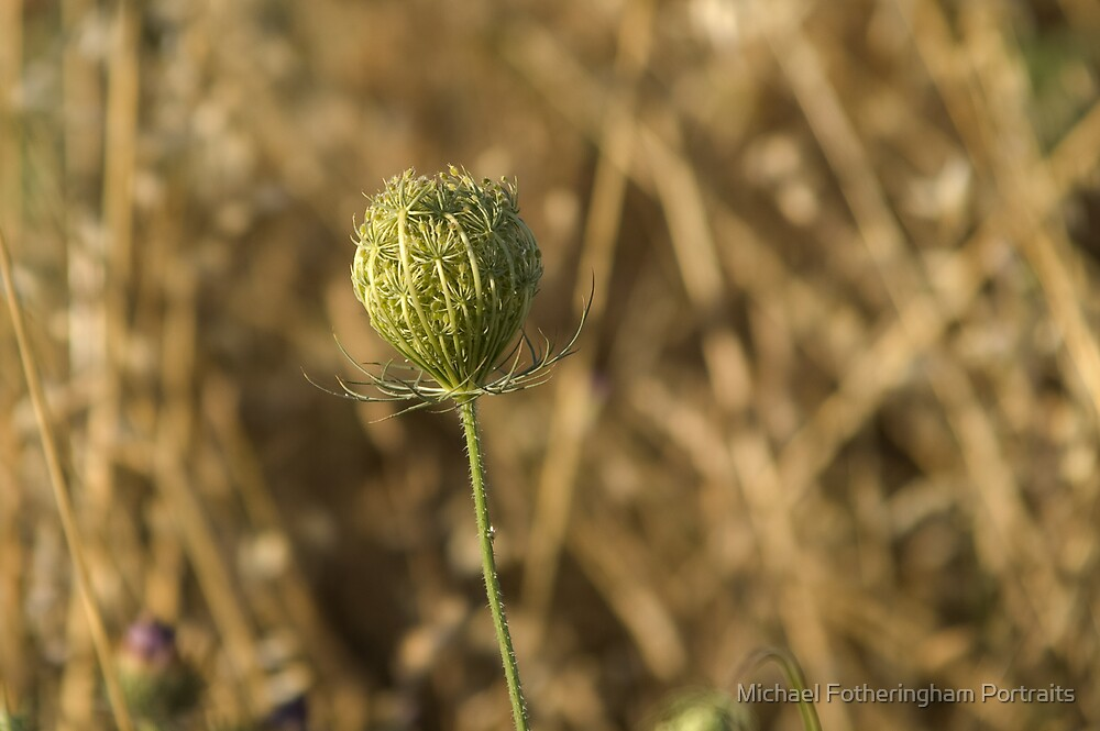 Thistle Ball by Michael Fotheringham Portraits