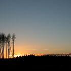 Glentrool Forest 4 by Viv Andrew
