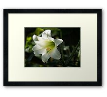 Divine Glow - Illuminated Pure White Easter Lily Framed Print