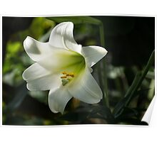 Divine Glow - Illuminated Pure White Easter Lily Poster