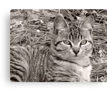 striped kitty Canvas Print