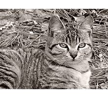 striped kitty Photographic Print