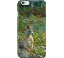 Kangaroo in the Ferns A iPhone Case/Skin