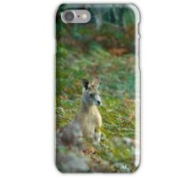 Kangaroo in the Ferns A iPhone Case/Skin