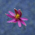 Floating Flower by Tori Snow