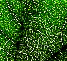 Green Leaf Macro by Nicolas Raymond