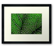 Green Leaf Macro Framed Print