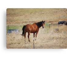 Looking Horse Canvas Print