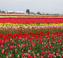 Field of Many Colors by Tori Snow