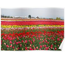 Field of Many Colors Poster