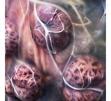 Bovine Uterus Photographic Print
