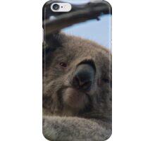 Koala up a tree A iPhone Case/Skin