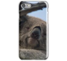 Koala up a tree A iPhone Case/Skin