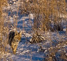 Stinkin' Tall Grass by Jay Ryser
