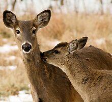 Two deers   by E. Mac MacKay