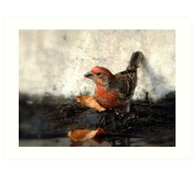 House Finch - Watering Hole Art Print