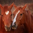 Equine Secrets by Sharon Morris