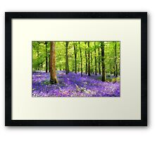 Among the bluebells Framed Print