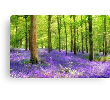 Among the bluebells Canvas Print