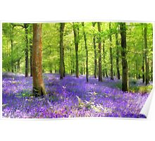 Among the bluebells Poster