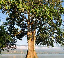 Tree by juan jose Gabaldon